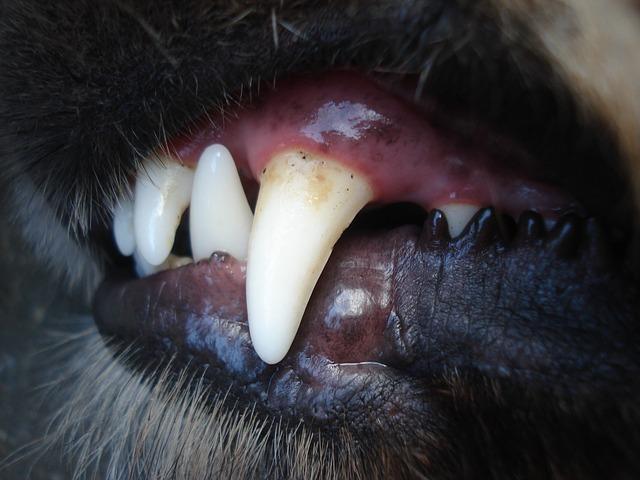Hund Zähne Putzen
